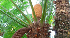 Cycads Wallpaper For IPhone Free