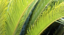 Cycads Wallpaper For IPhone#1