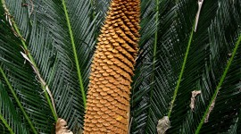 Cycads Wallpaper For The Smartphone