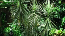 High Dracaena Wallpaper High Definition