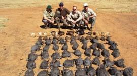 Hunters Wallpaper Download