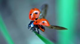 Ladybug Flight Aircraft Picture