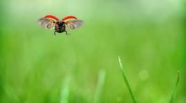 Ladybug Flight Desktop Wallpaper