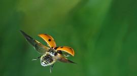 Ladybug Flight Image