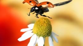 Ladybug Flight Image Download