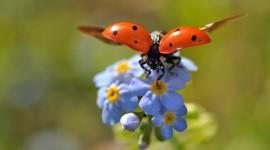 Ladybug Flight Photo