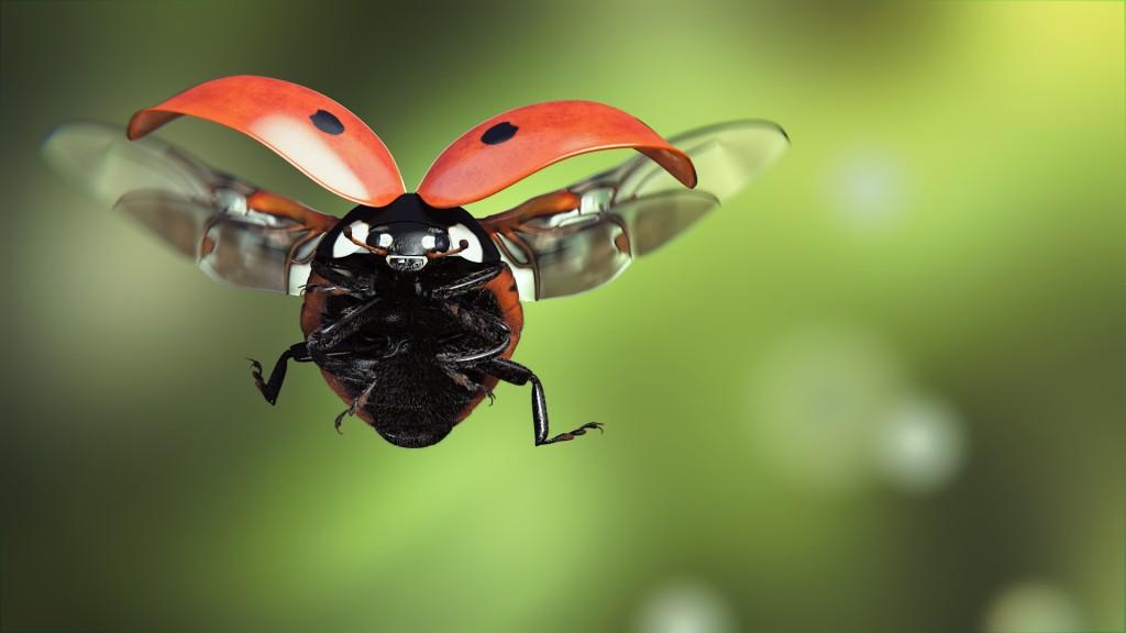 Ladybug Flight wallpapers HD