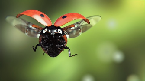 Ladybug Flight wallpapers high quality