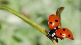 Ladybug Flight Wallpaper Full HD