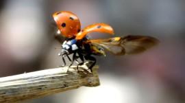 Ladybug Flight Wallpaper Gallery