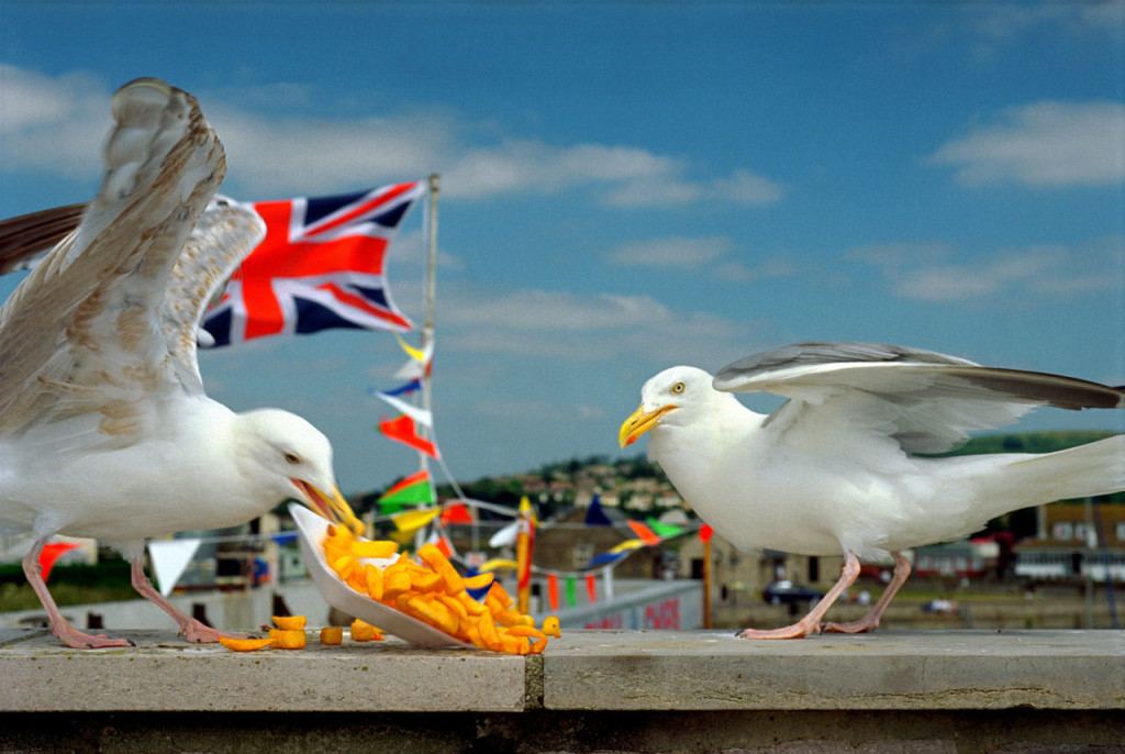 Martin Parr Photos wallpapers HD