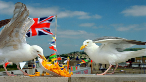 Martin Parr Photos wallpapers high quality