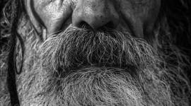 Old Man's Beard Wallpaper For Mobile