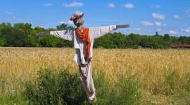 Scarecrow Field Desktop Wallpaper