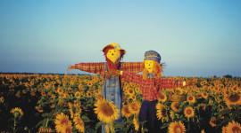 Scarecrow Field Desktop Wallpaper HD