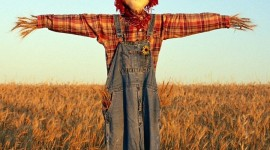 Scarecrow Field Image