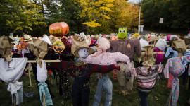Scarecrow Field Photo