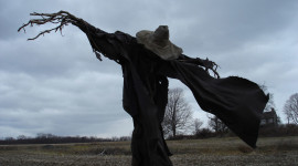 Scarecrow Field Photo Download