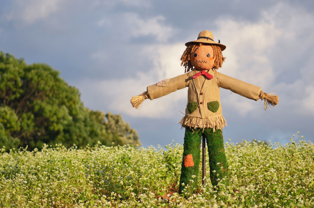 Scarecrow Field wallpapers HD