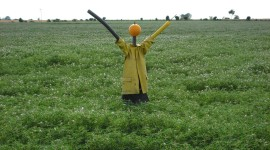 Scarecrow Field Wallpaper Free