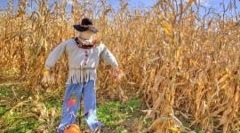 Scarecrow Field Wallpaper Full HD