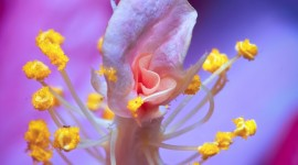 Stamen Wallpaper For IPhone Free