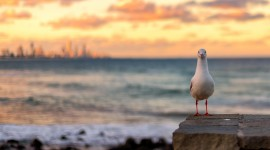 Sunset Seagull Best Wallpaper