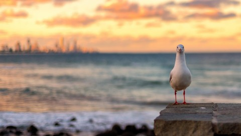 Sunset Seagull wallpapers high quality