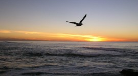 Sunset Seagull Desktop Wallpaper
