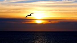 Sunset Seagull Photo