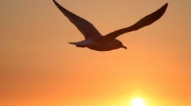 Sunset Seagull Wallpaper For Desktop
