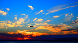 Sunset Seagull Wallpaper For PC