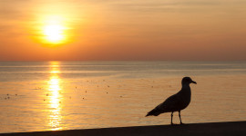 Sunset Seagull Wallpaper Free