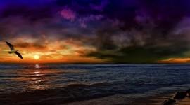 Sunset Seagull Wallpaper Full HD