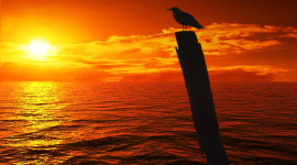 Sunset Seagull Wallpaper HQ