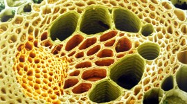 Under A Microscope Image