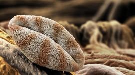 Under A Microscope Wallpaper Full HD