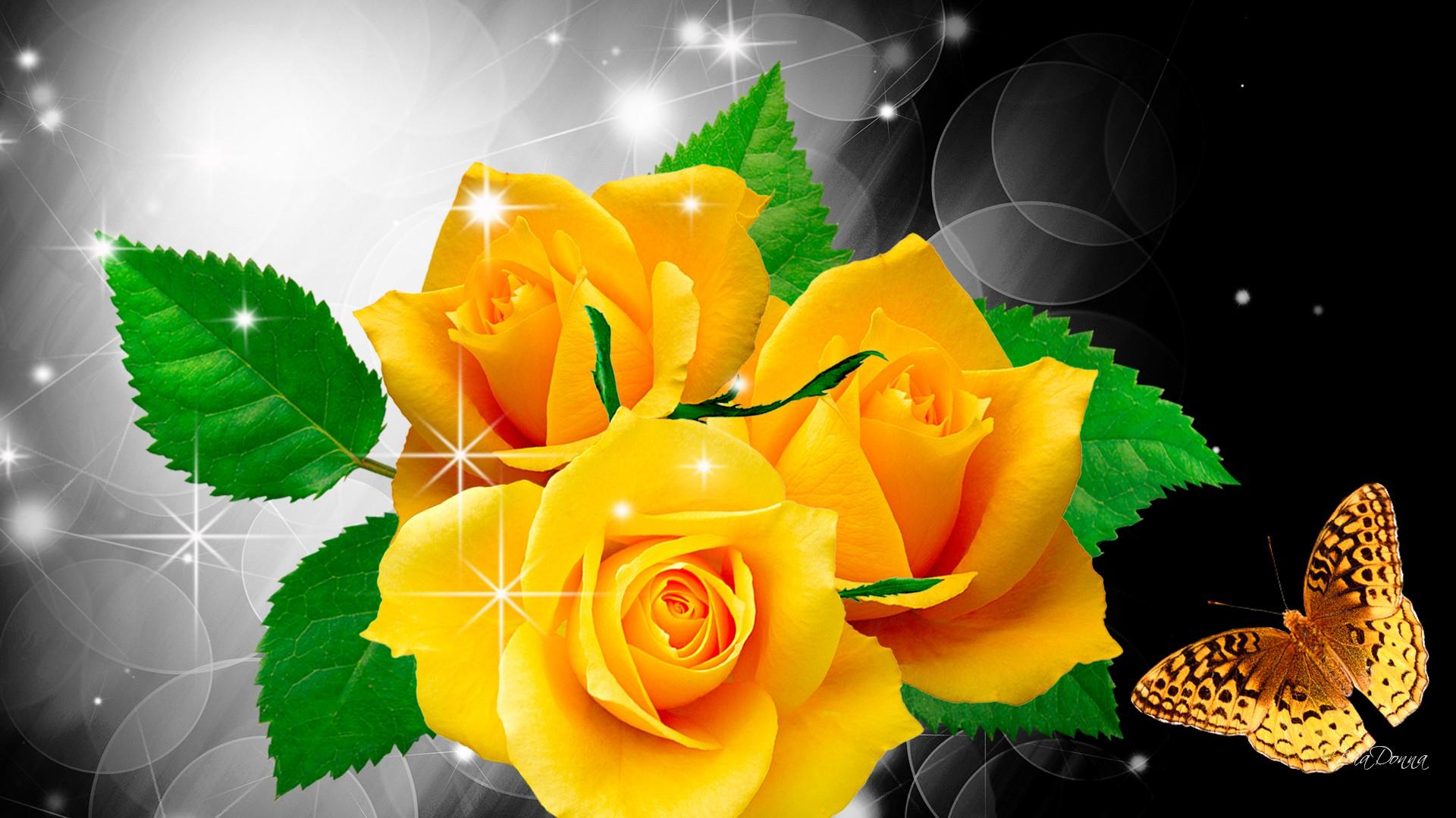 Hd wallpaper yellow rose - Hd Wallpaper Yellow Rose Yellow Rose Wallpapers High Quality Free