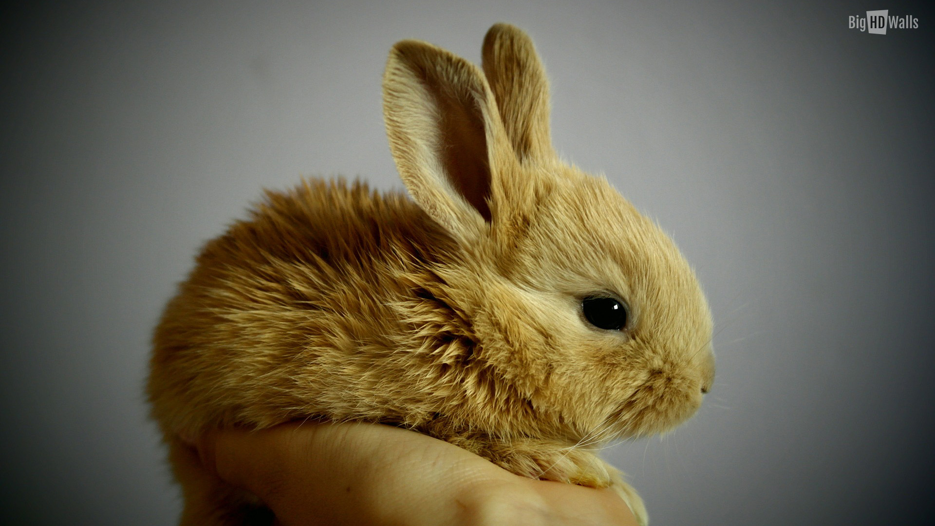 Bunny Wallpapers High Quality Download Free