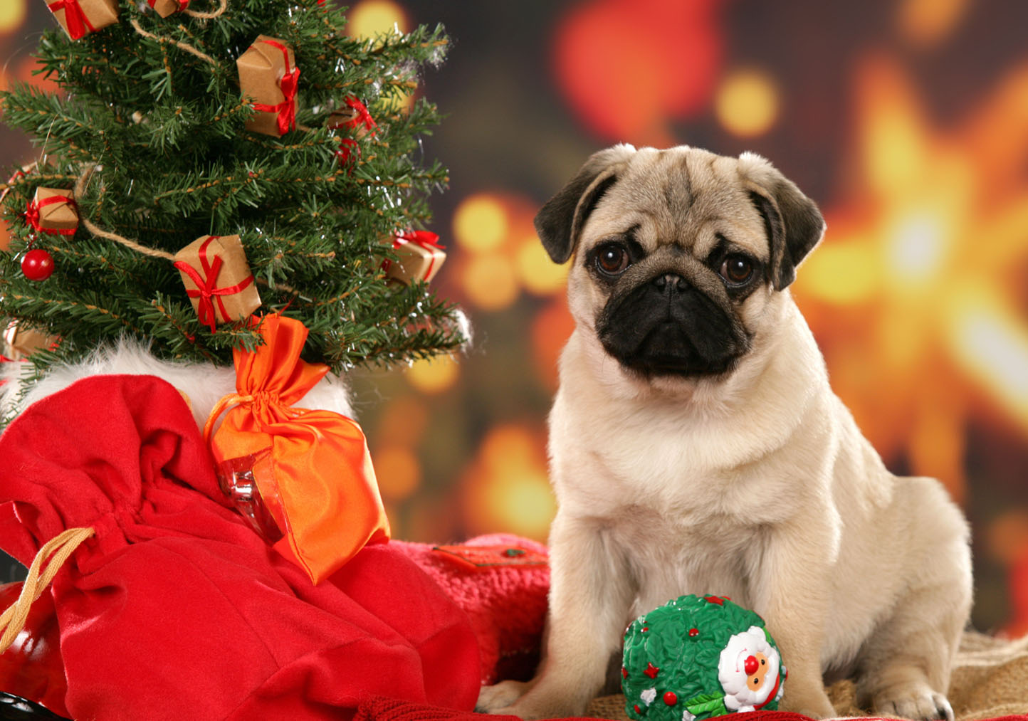 christmas dogs wallpapers high quality | download free