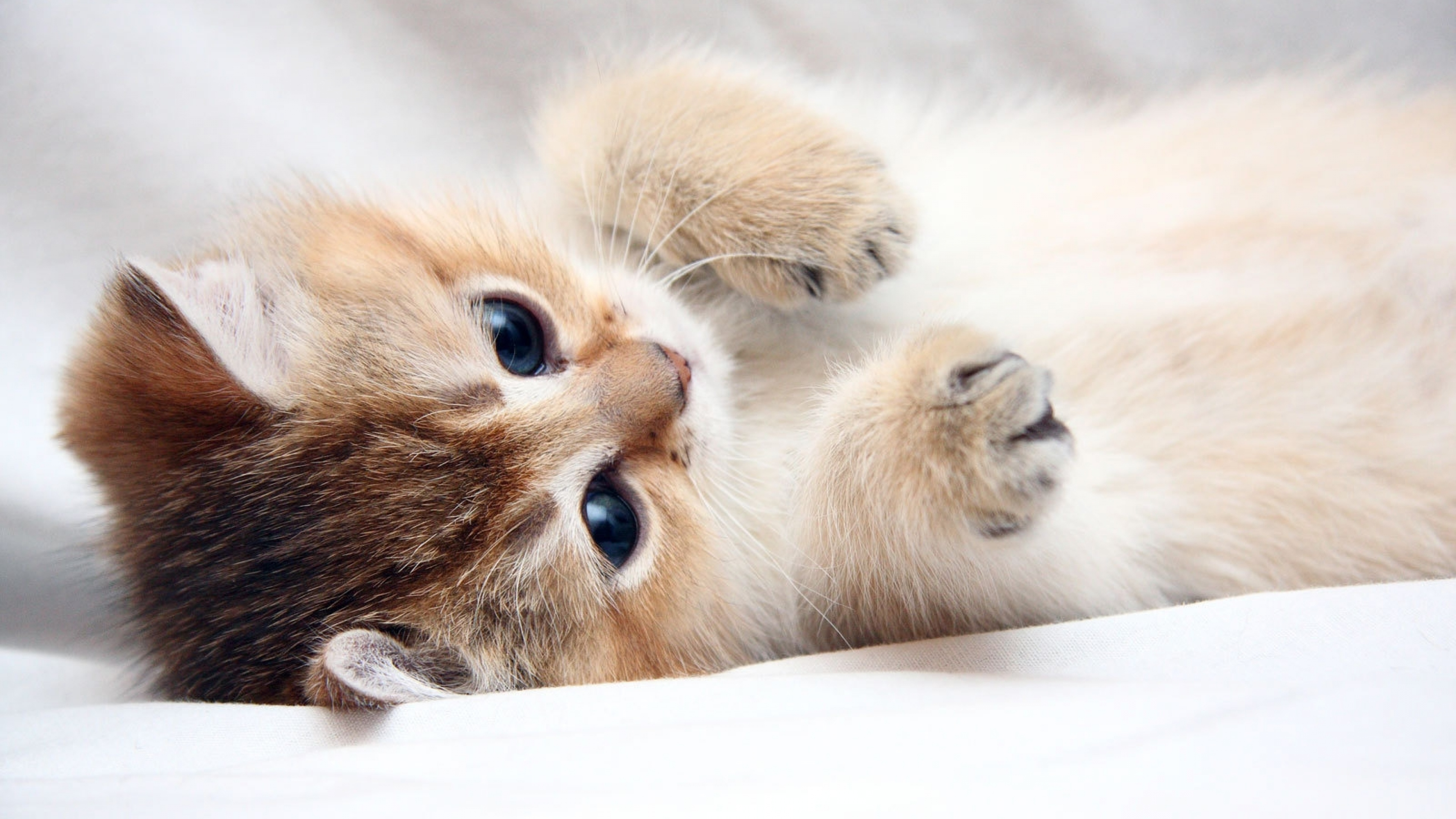 4k cat wallpapers high quality | download free