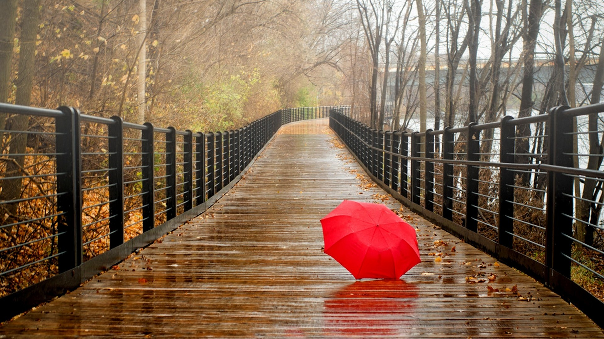 4K Umbrellas Wallpapers High Quality   Download Free