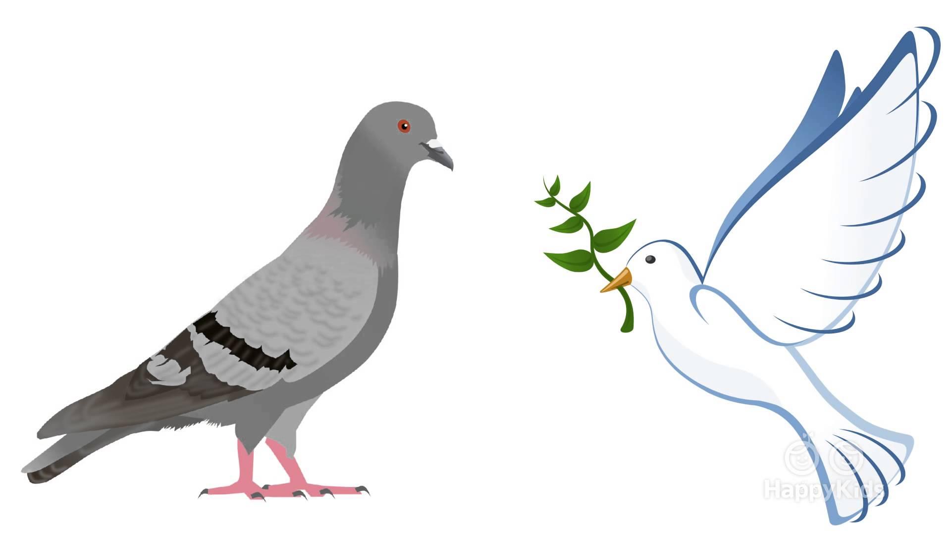 Картинка птицы голуби для детей