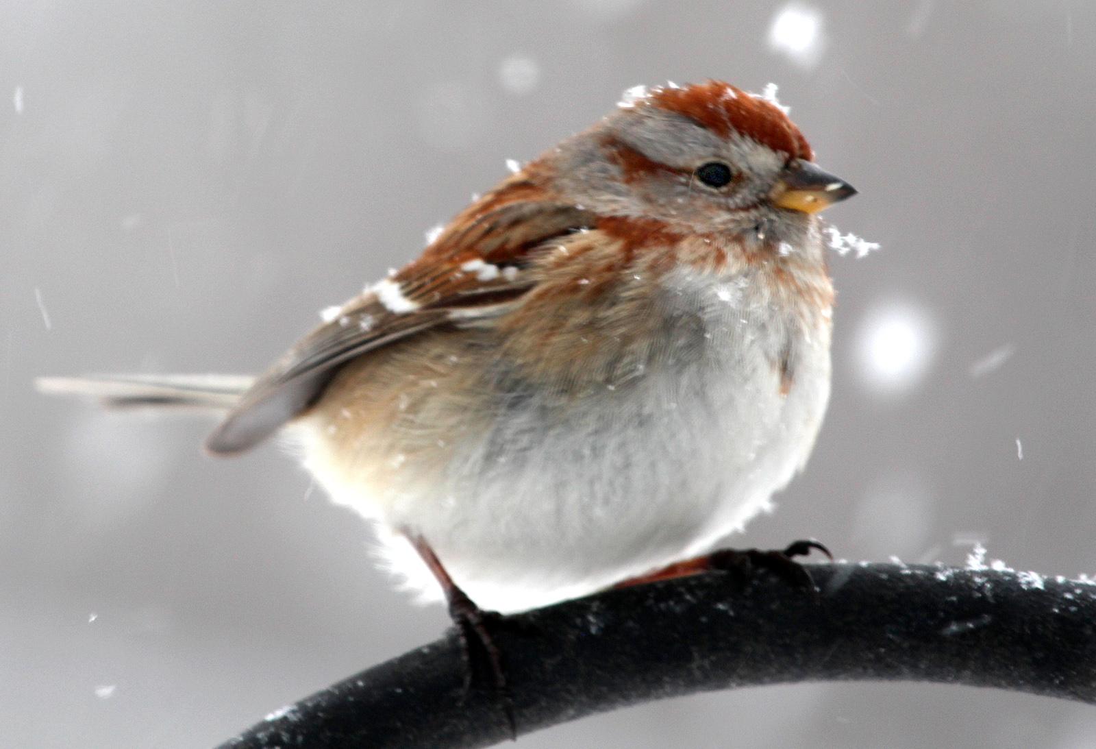 Bird box hd مترجم