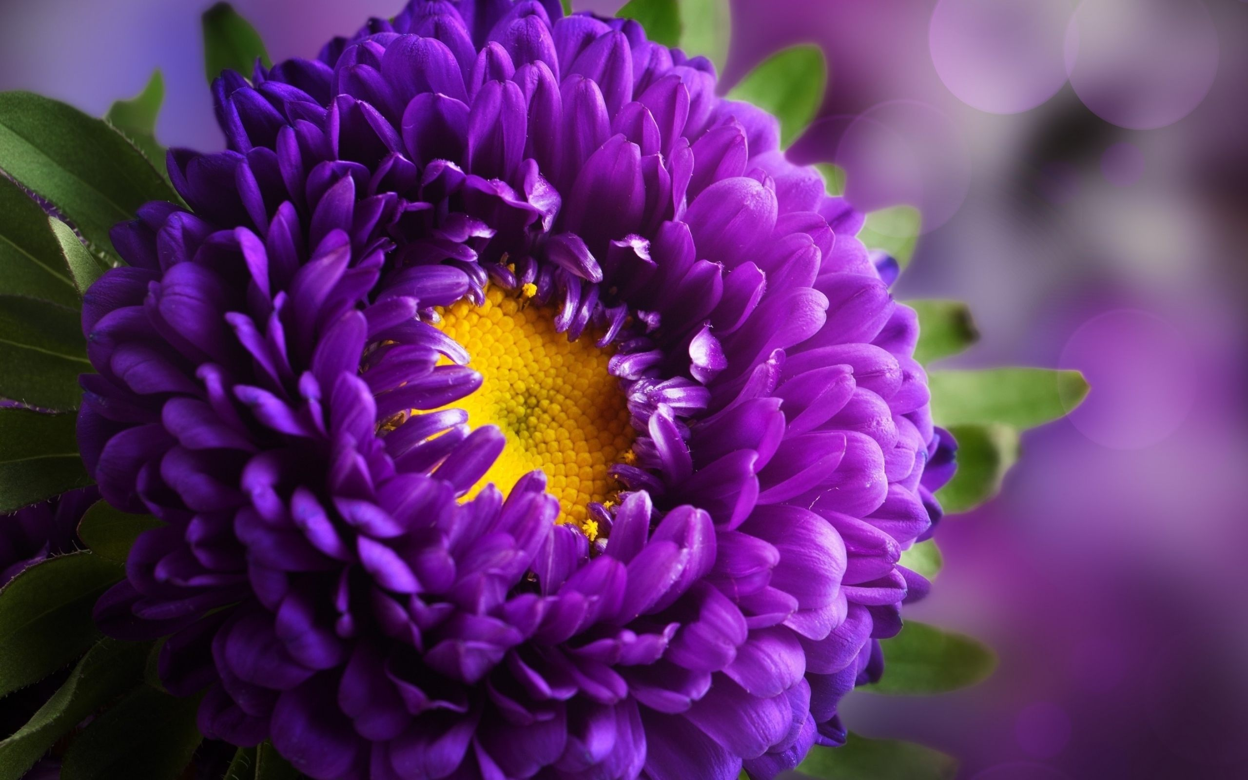Purple Flowers Wallpapers High Quality | Download Free