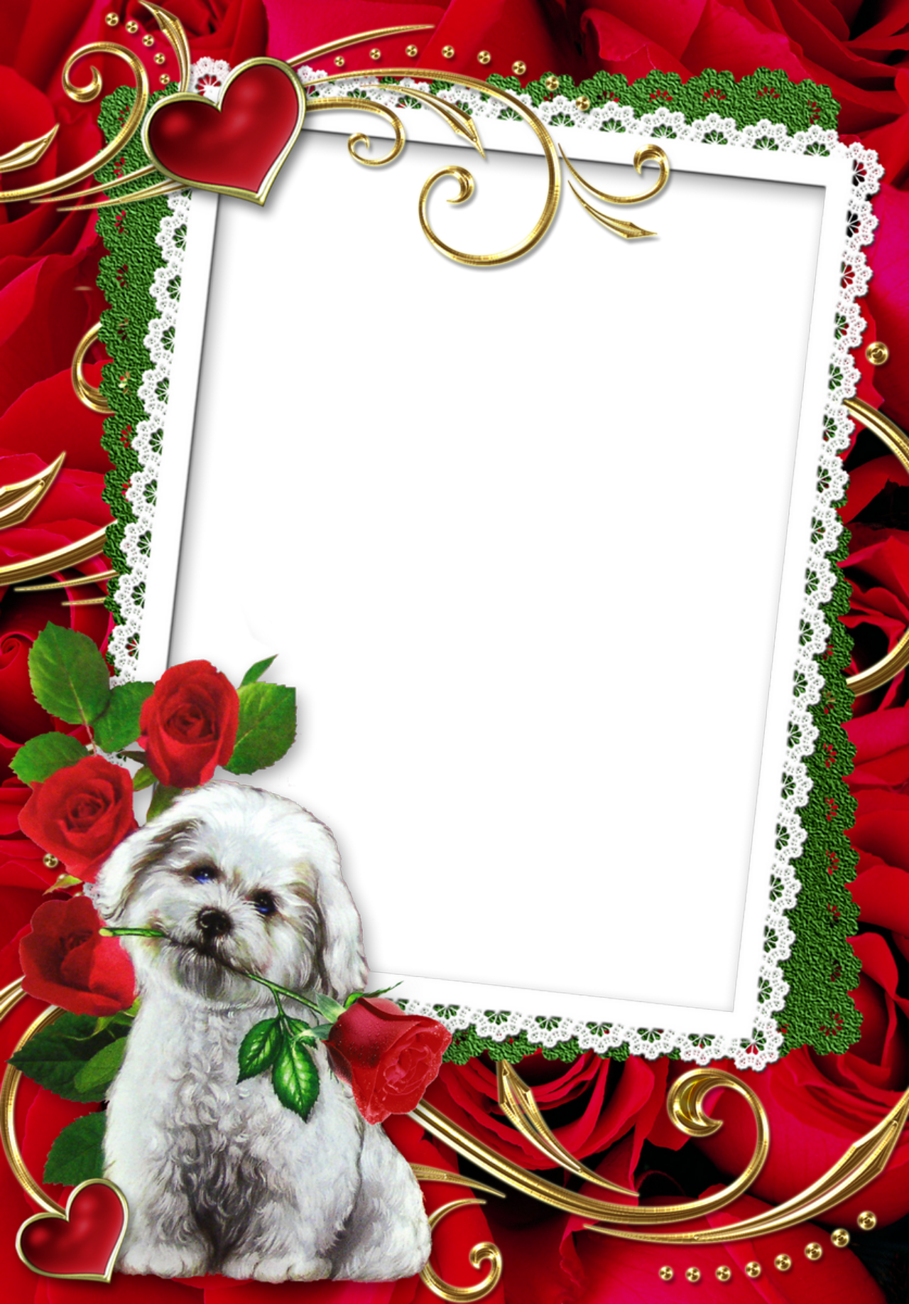 Rose Frames Wallpapers High Quality | Download Free