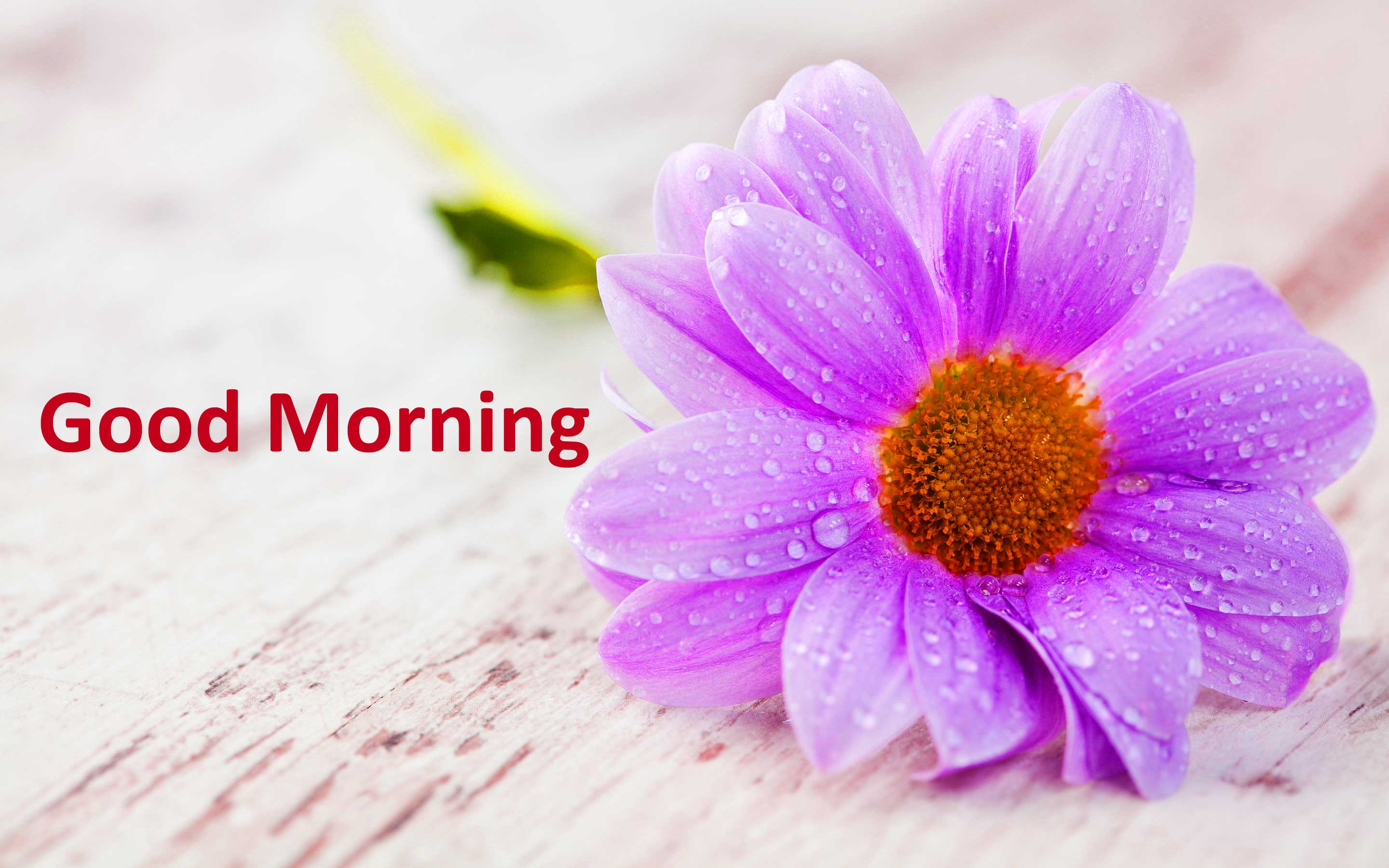 4K Good Morning Wallpapers High Quality | Download Free