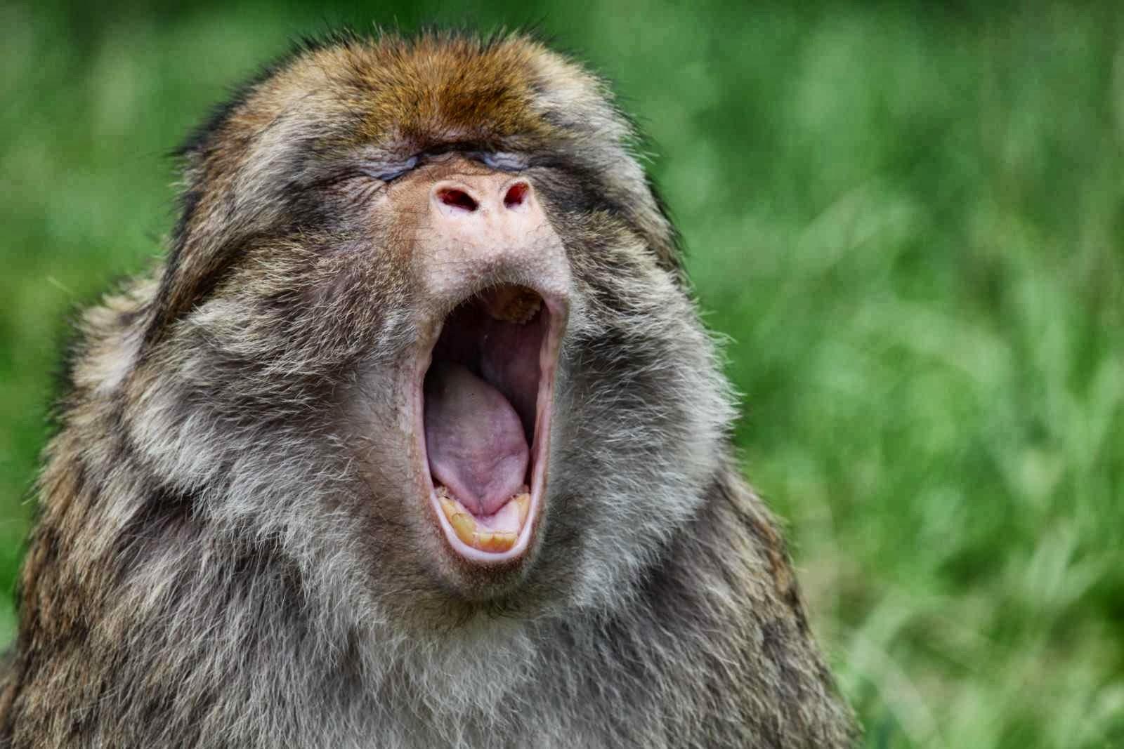 размещенные фото зевающих животных объявление отдыхе